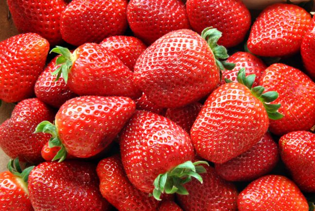 The Dutch strawberry crop is getting bigger, despite fewer farmers