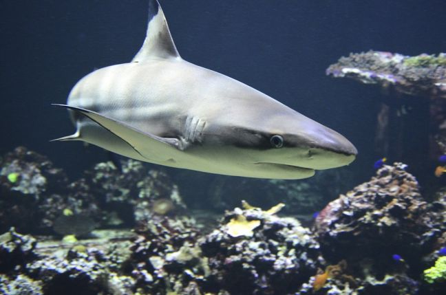 Bonaire Hosts International Meeting on Protection of Sharks