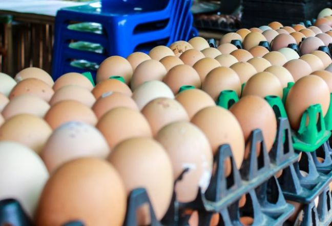 Contaminated eggs may have been sold in Dutch shops for a year: Volkskrant