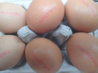 Contaminated egg scandal rumbles on, fipronil found in Romanian eggs