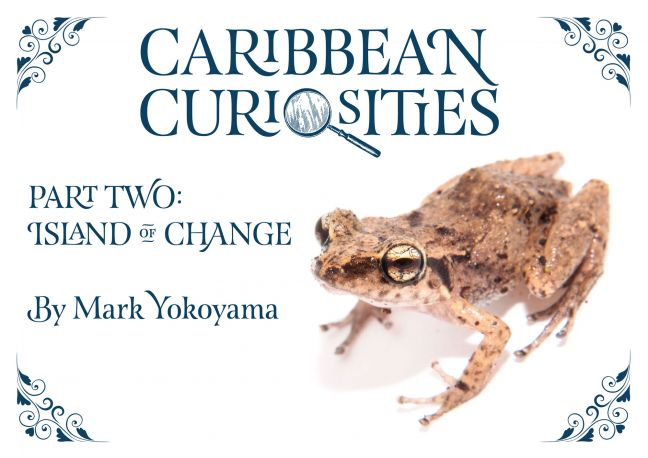 The ebook Caribbean Curiosities: Island of Change is now available for free download.