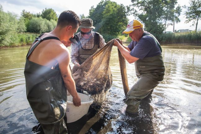 This angling club near Enschede is moving fish to deeper pools. Photo: Herman Engbers via HH