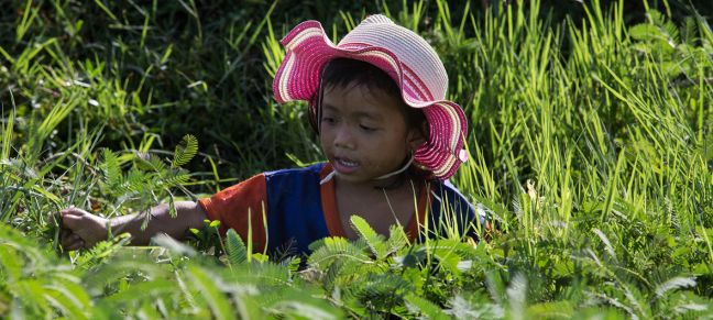 © UNICEF/Khoy Bona A four year old girl in Cambodia works in a field collecting water mimosa . (file 2017)