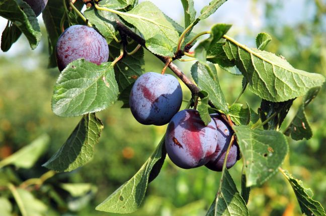 Photo: Depositphotos