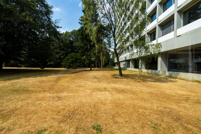 The lawns at Tilburg University have withered in the drought. Photo Guido Koppes via HH