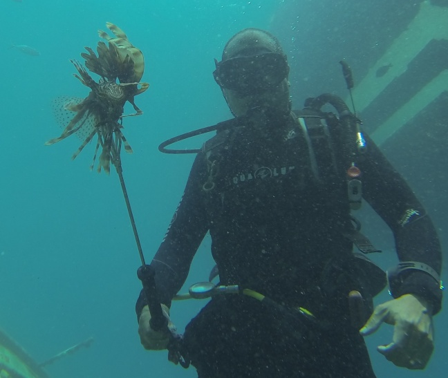 Nature Foundation Diver after Lionfish Removal from Divi Little Bay. (photo contributed)