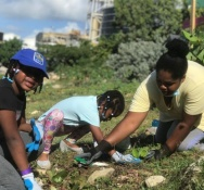 Re-greening SXM Project to Launch their Final Tree Planting Event