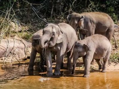 Ten new migratory species protected under global wildlife agreement