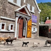 Assistance for Saba's goat owners