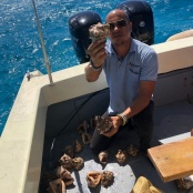 Nature Foundation Disposes of Illegally Imported Conch Shells after Seizure by Customs