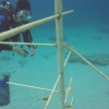 Unknown Incident Causes Significant Damage to Nature Foundation Coral Reef Program