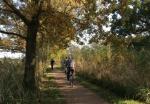 Dutch pension system leads world ranking, reforms still far off