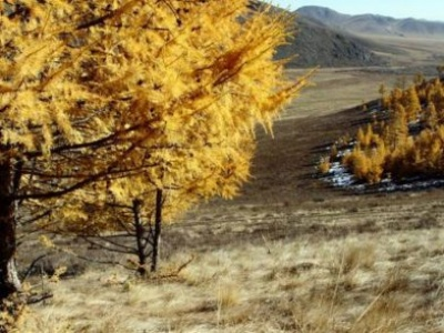 UN agriculture agency digs in to help forests and farms build resilience to climate change