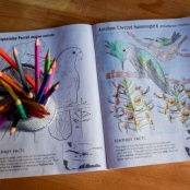Free Bird Coloring Book Offers Virtual Tour of the Caribbean