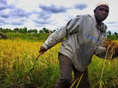 Free up 'bottlenecks' stifling Africa's agri-food sector, urges FAO chief