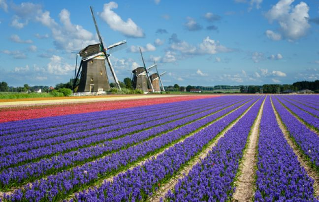 The classic view of the Netherlands. Photo: Depositphotos