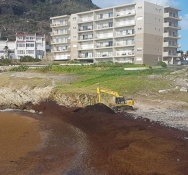 Nature Foundation Gives Recommendation on the Proper Cleaning and Disposal of Sargassum Seaweed